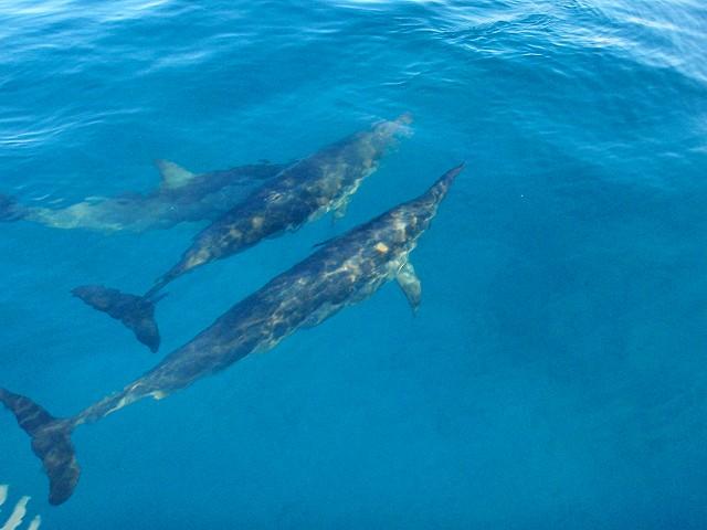 2月 » 2014 » ハワイダイビング ?楽園ハワイ・海の風景?
